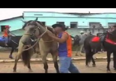 Drunk Man Falls Off Horse