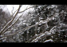 Director's Commentary: Snow on Branch