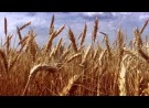 Director's Commentary: Wheat Field